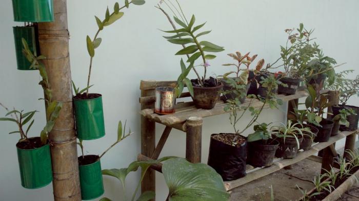 Contoh tanaman di lahan sempit