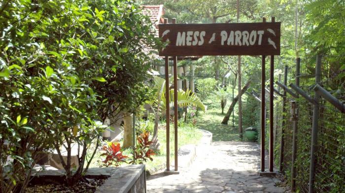 Mess Parrot
