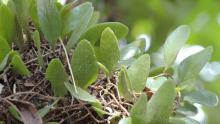Flora yang ada di P-WEC