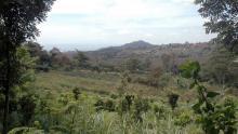 Ladang petani yang berdampingan dengan P-WEC