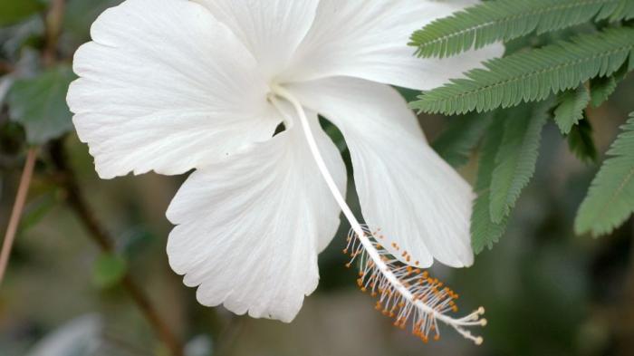 Flora in P-WEC