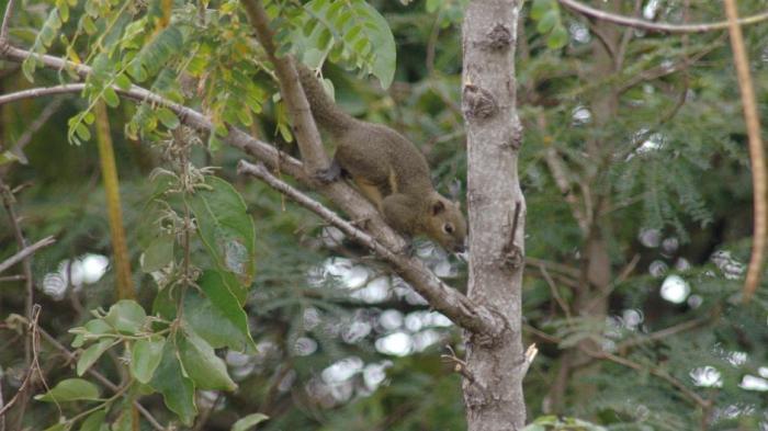 Squirrel in P-WEC